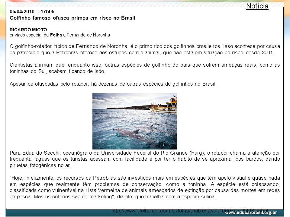 Notícia 05/04/2010 - 17h05. Golfinho famoso ofusca primos em risco no Brasil. RICARDO MIOTO enviado especial da Folha a Fernando de Noronha.