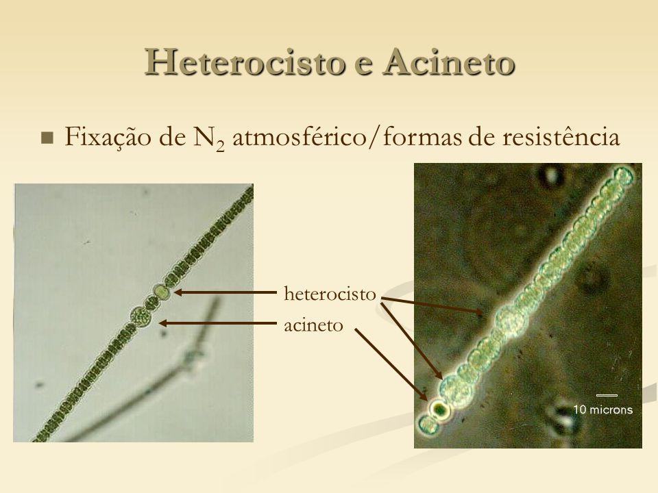 Heterocisto e Acineto Fixação de N2 atmosférico/formas de resistência