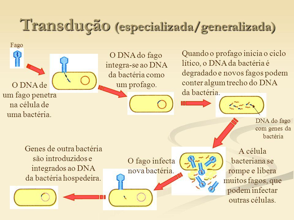 Transdução (especializada/generalizada)
