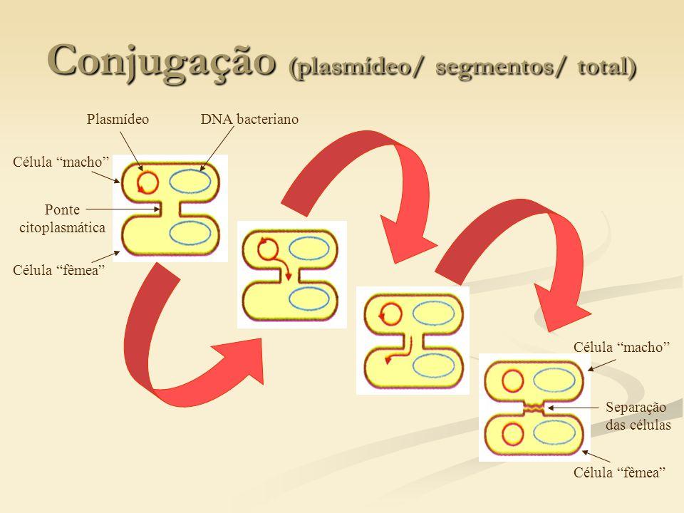 Conjugação (plasmídeo/ segmentos/ total)
