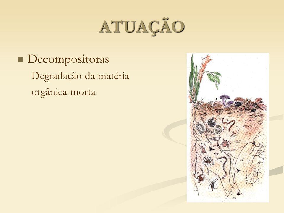ATUAÇÃO Decompositoras Degradação da matéria orgânica morta