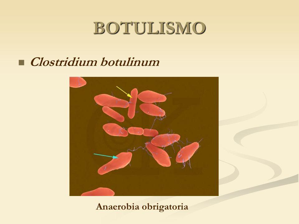 BOTULISMO Clostridium botulinum Anaerobia obrigatoria