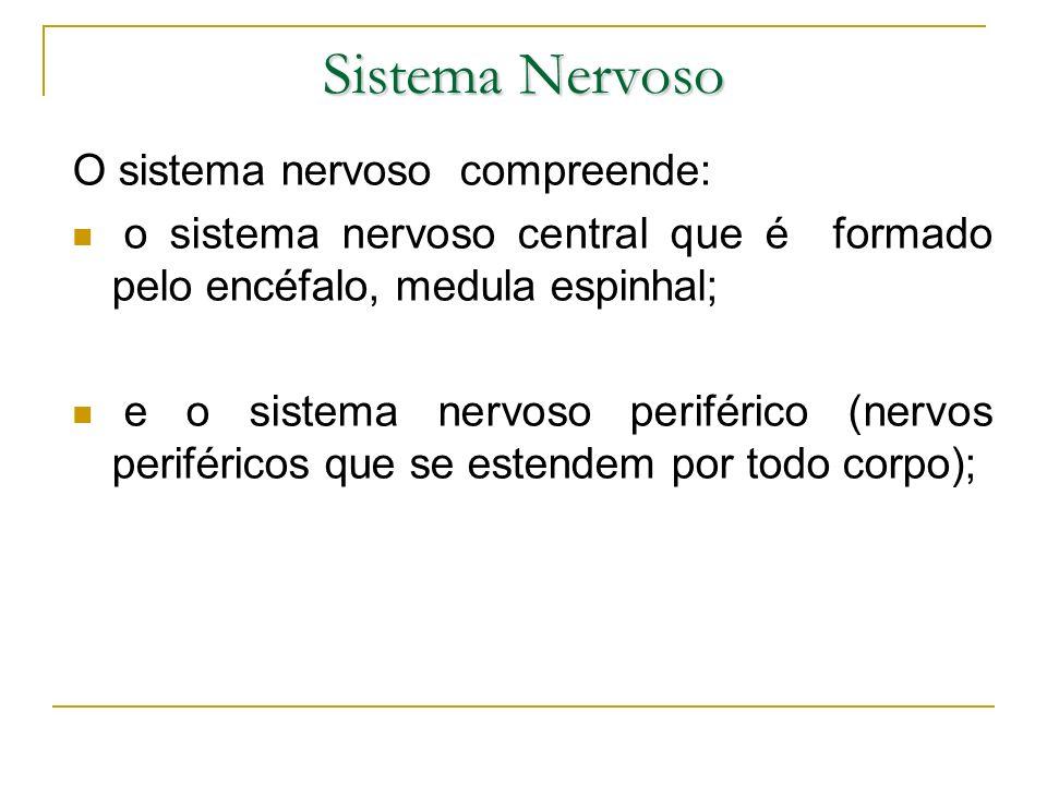 Sistema Nervoso O sistema nervoso compreende: