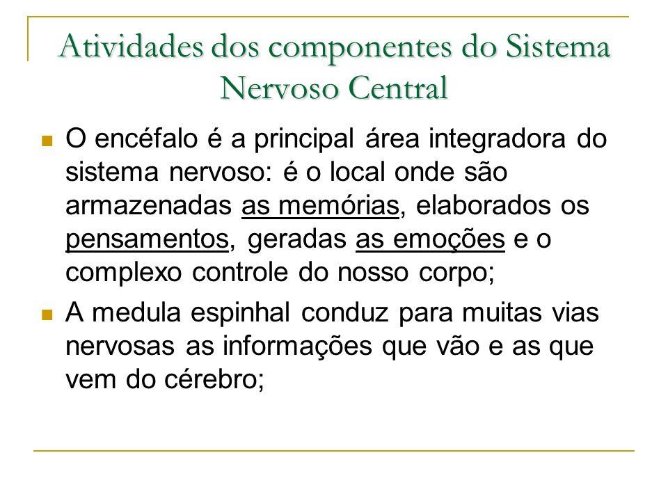 Atividades dos componentes do Sistema Nervoso Central