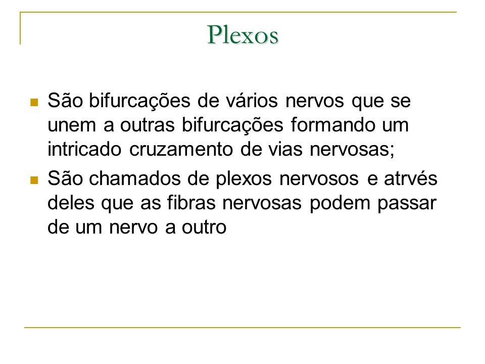 Plexos São bifurcações de vários nervos que se unem a outras bifurcações formando um intricado cruzamento de vias nervosas;
