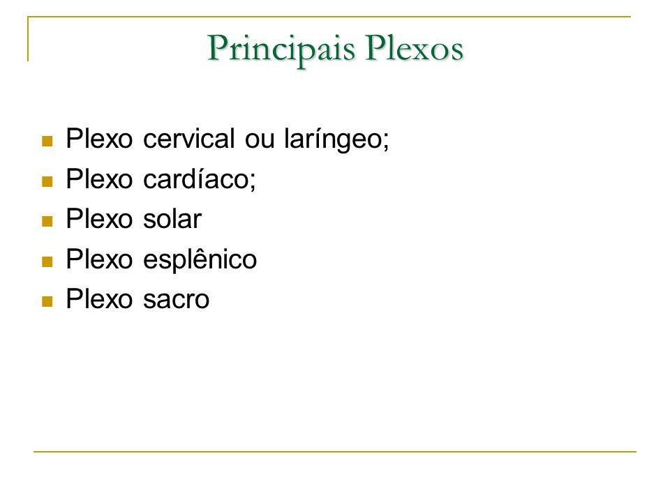 Principais Plexos Plexo cervical ou laríngeo; Plexo cardíaco;
