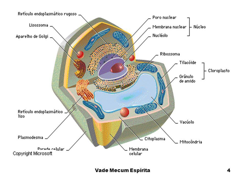 Explicar que o Ectoplasma é produzido no citoplasma da célula