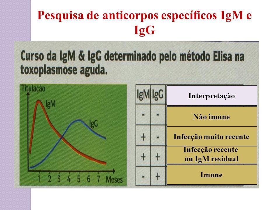 Pesquisa de anticorpos específicos IgM e IgG Infecção muito recente