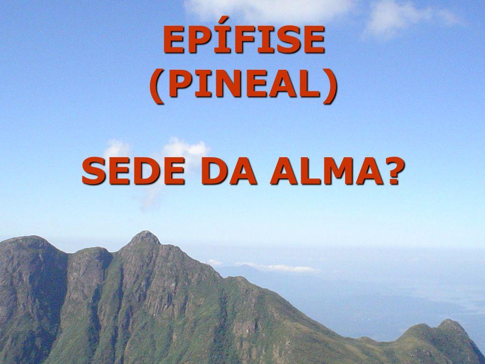 EPÍFISE (PINEAL) SEDE DA ALMA