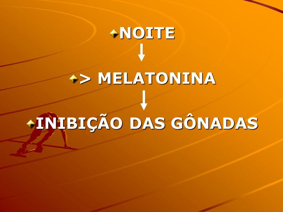 NOITE > MELATONINA INIBIÇÃO DAS GÔNADAS
