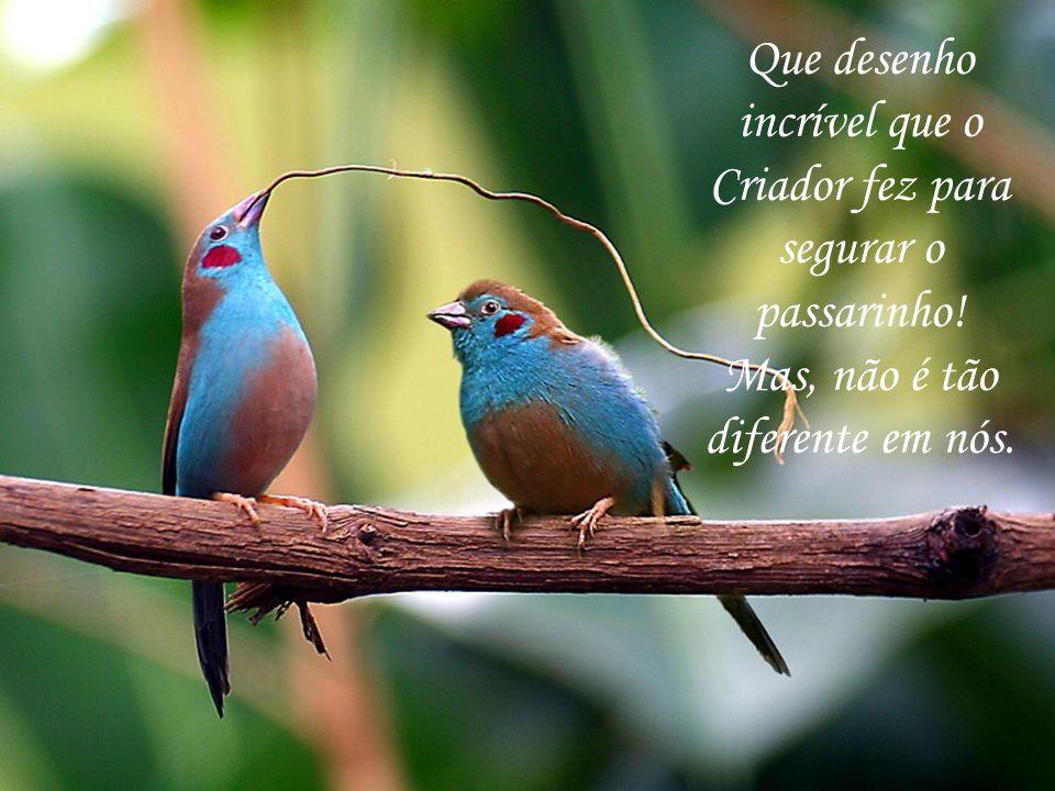 Que desenho incrível que o Criador fez para segurar o passarinho