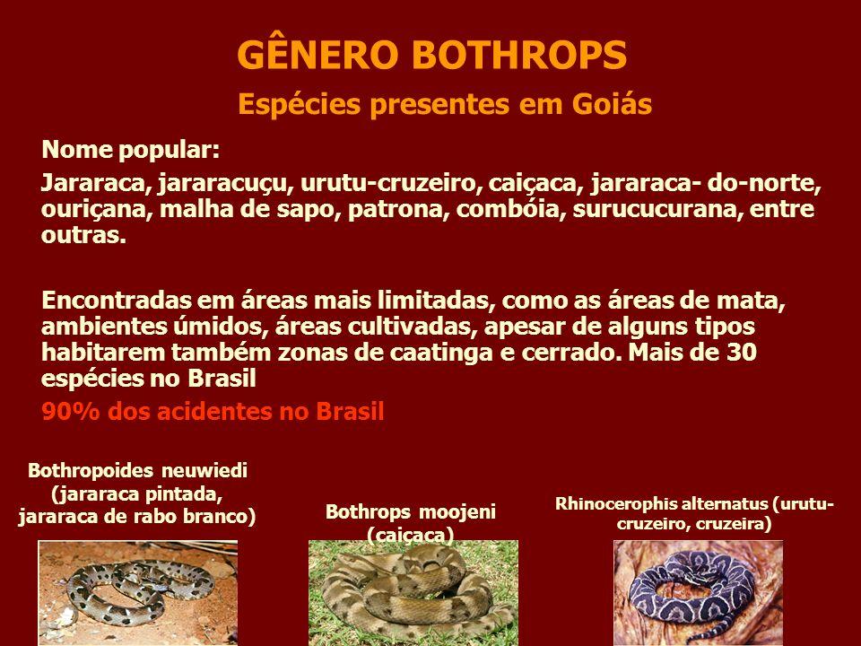 GÊNERO BOTHROPS Espécies presentes em Goiás Nome popular: