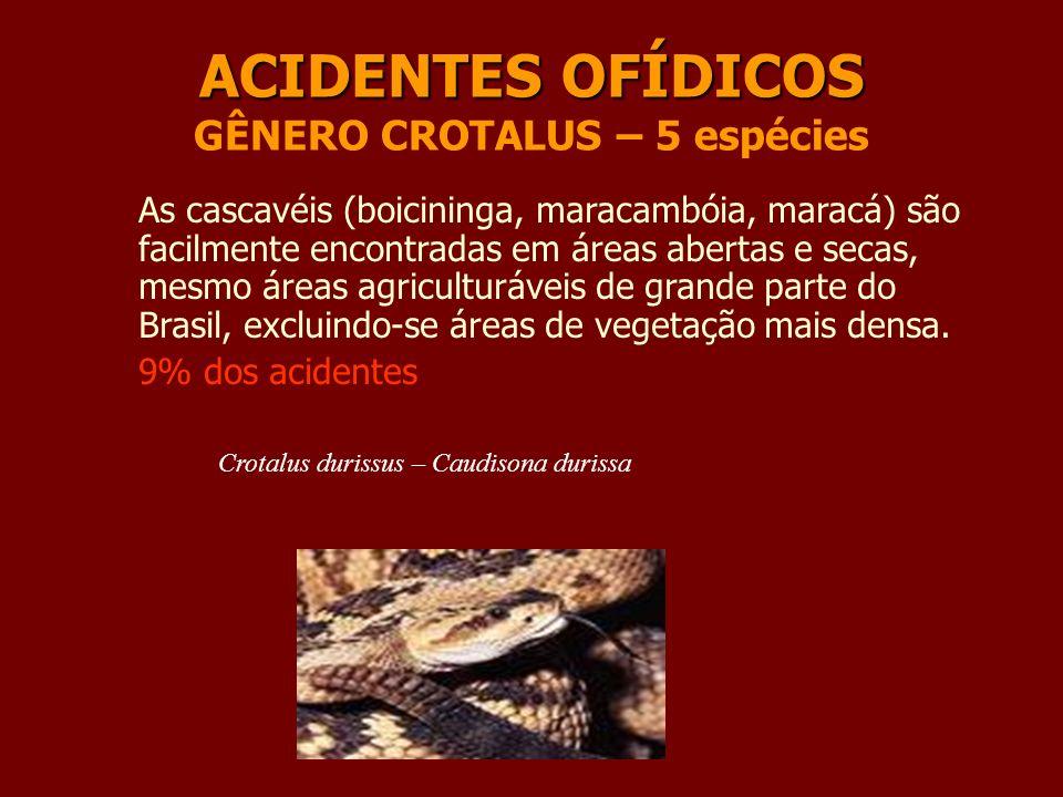 ACIDENTES OFÍDICOS GÊNERO CROTALUS – 5 espécies