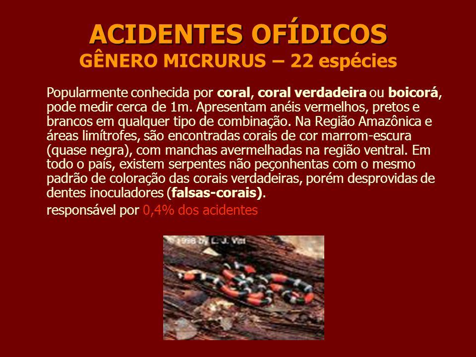ACIDENTES OFÍDICOS GÊNERO MICRURUS – 22 espécies