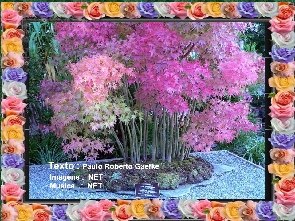 Texto : Paulo Roberto Gaefke