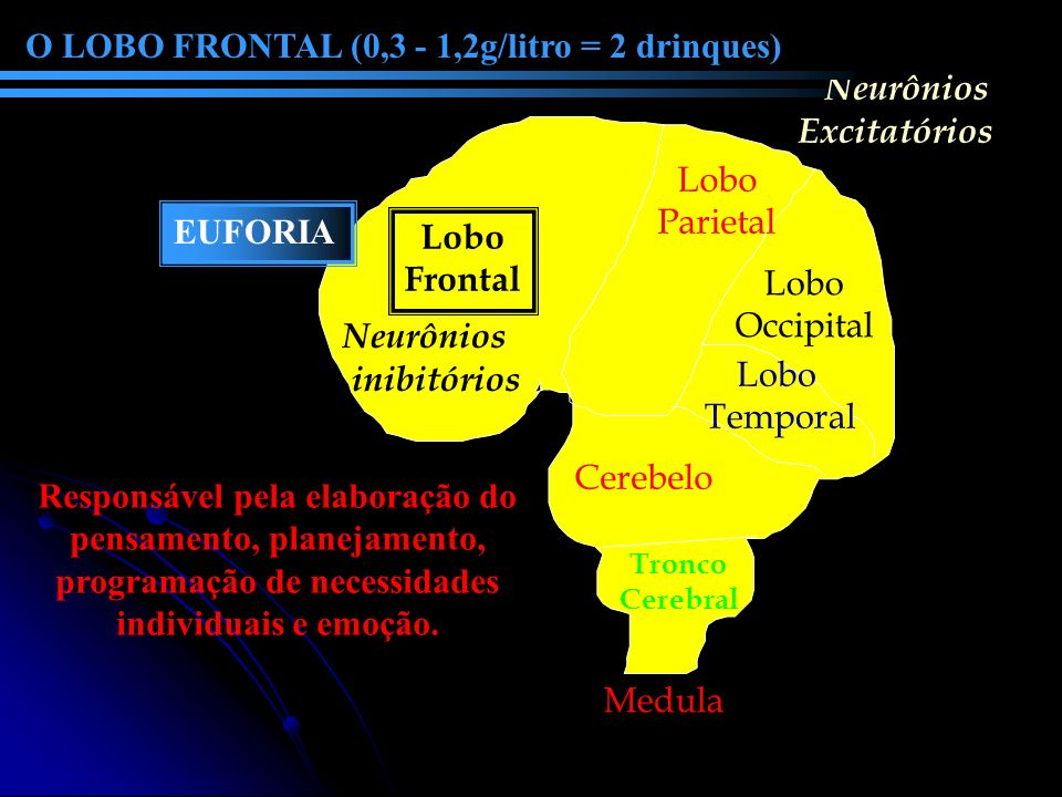 O LOBO FRONTAL (0,3 - 1,2g/litro = 2 drinques) Neurônios Excitatórios