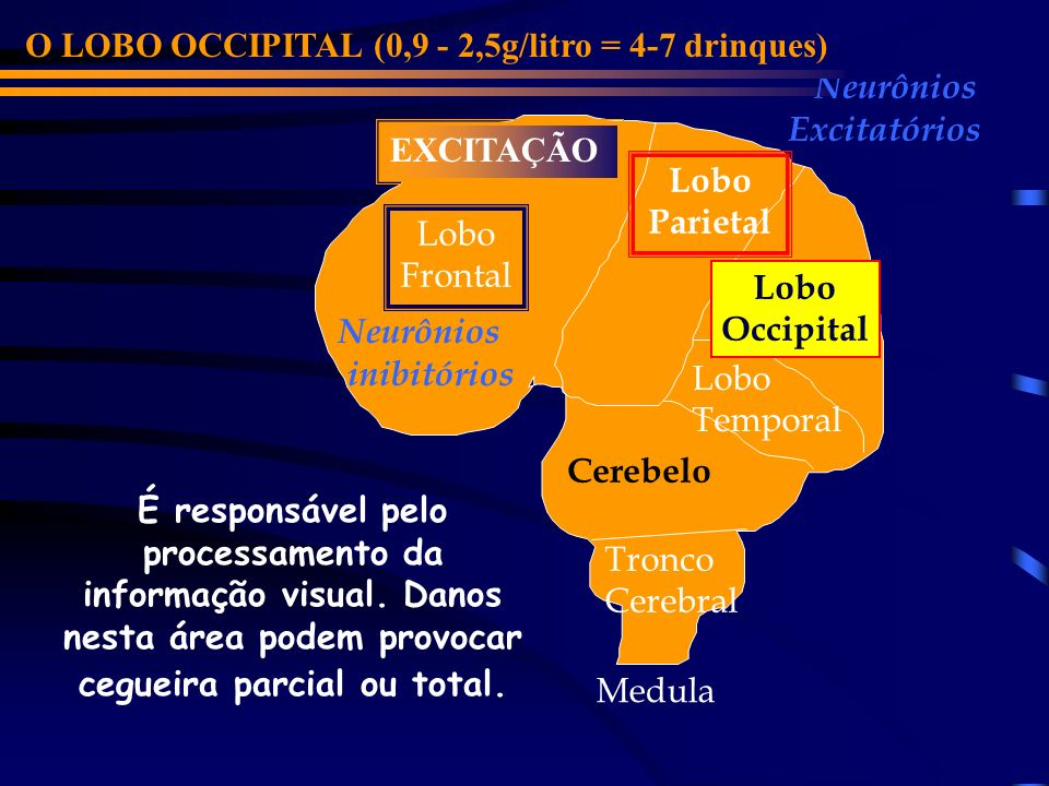 O LOBO OCCIPITAL (0,9 - 2,5g/litro = 4-7 drinques)