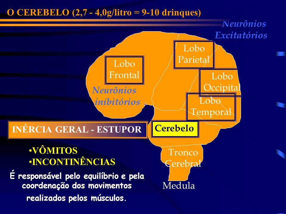 O CEREBELO (2,7 - 4,0g/litro = 9-10 drinques) Neurônios Excitatórios