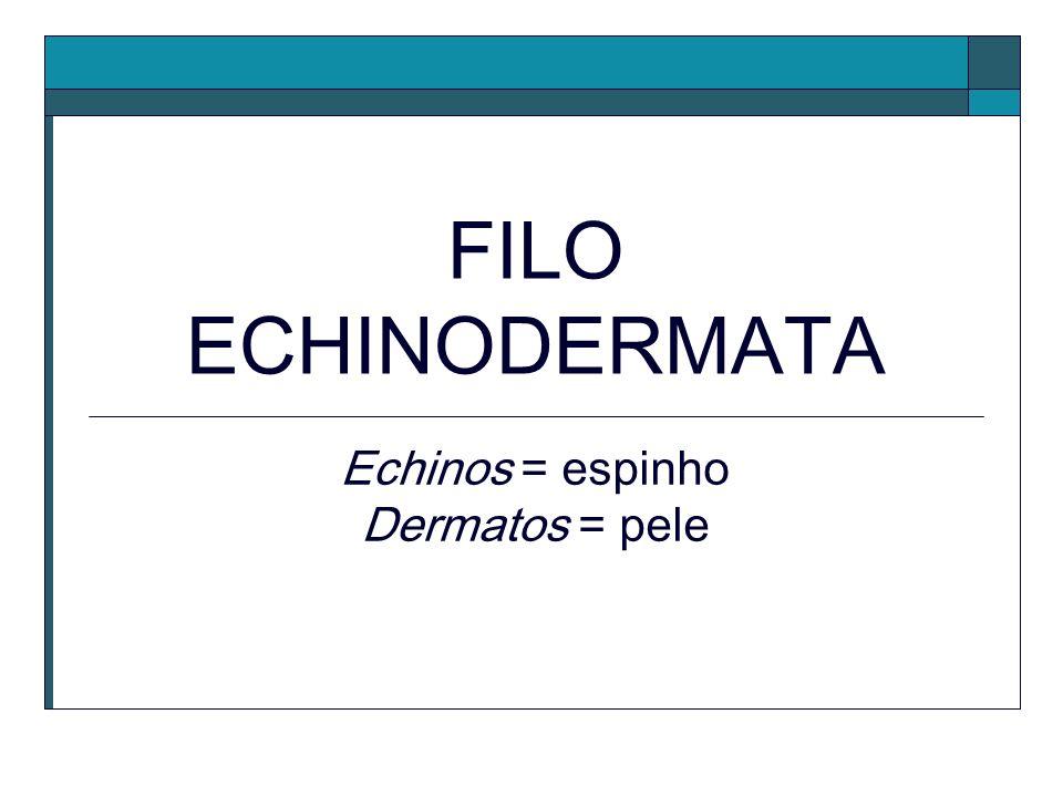 Echinos = espinho Dermatos = pele