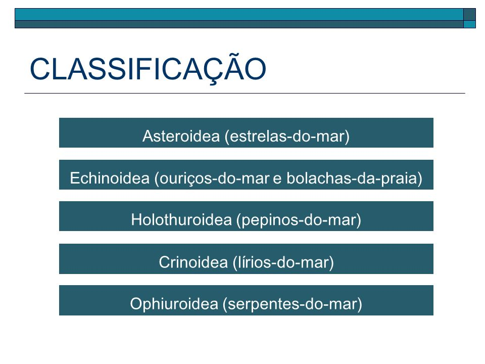 CLASSIFICAÇÃO Asteroidea (estrelas-do-mar)