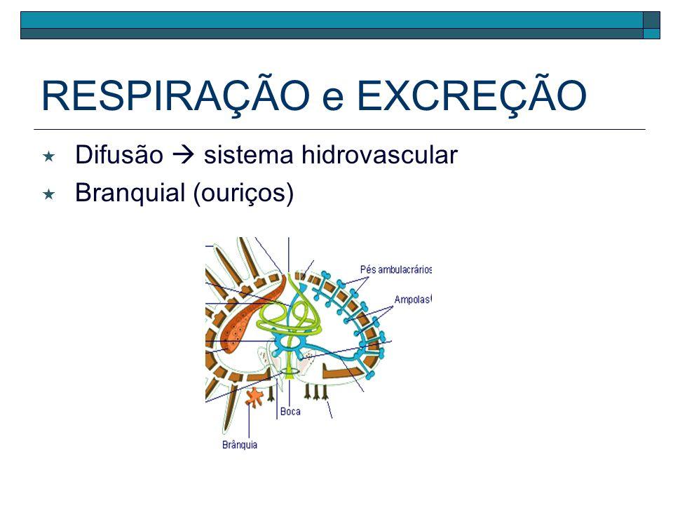 RESPIRAÇÃO e EXCREÇÃO Difusão  sistema hidrovascular