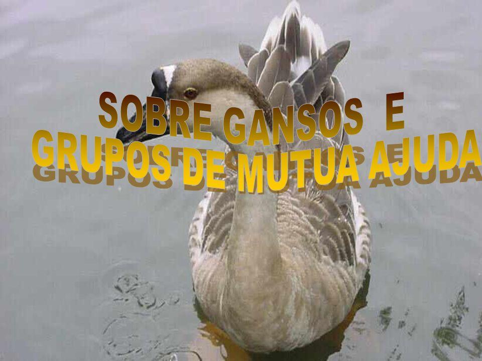 SOBRE GANSOS E GRUPOS DE MUTUA AJUDA