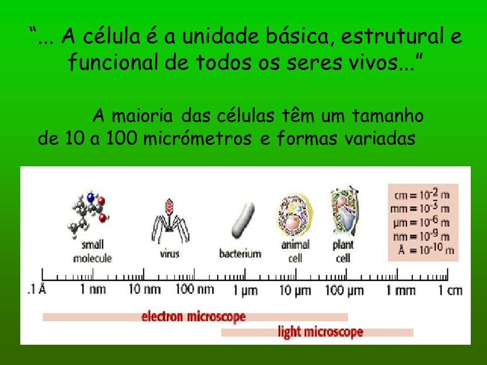 ... A célula é a unidade básica, estrutural e funcional de todos os seres vivos...