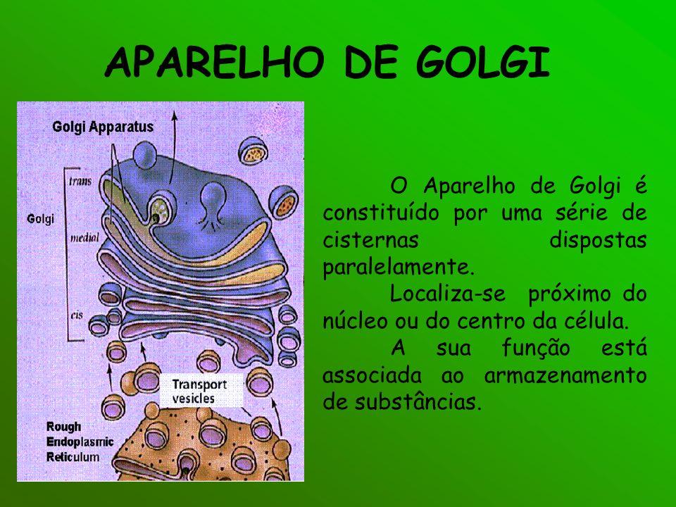 APARELHO DE GOLGI O Aparelho de Golgi é constituído por uma série de cisternas dispostas paralelamente.