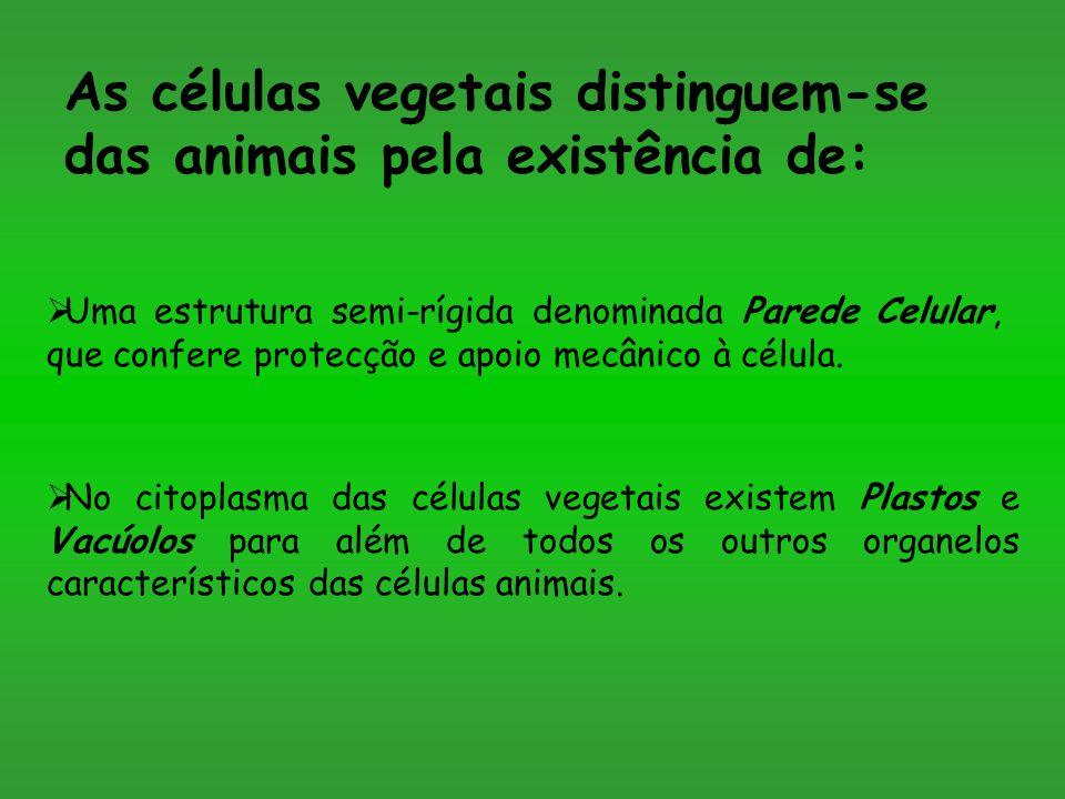 As células vegetais distinguem-se das animais pela existência de: