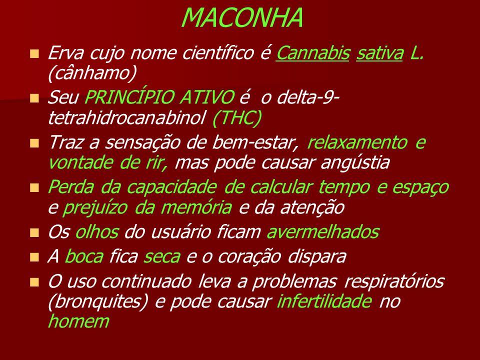 MACONHA Erva cujo nome científico é Cannabis sativa L. (cânhamo)