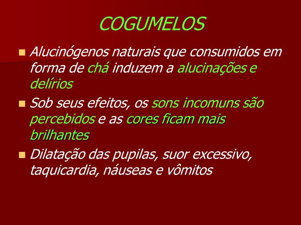 COGUMELOS Alucinógenos naturais que consumidos em forma de chá induzem a alucinações e delírios.