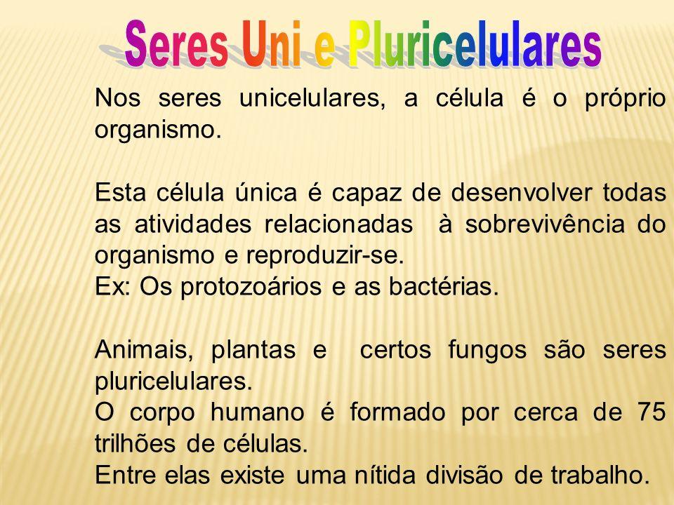 Seres Uni e Pluricelulares