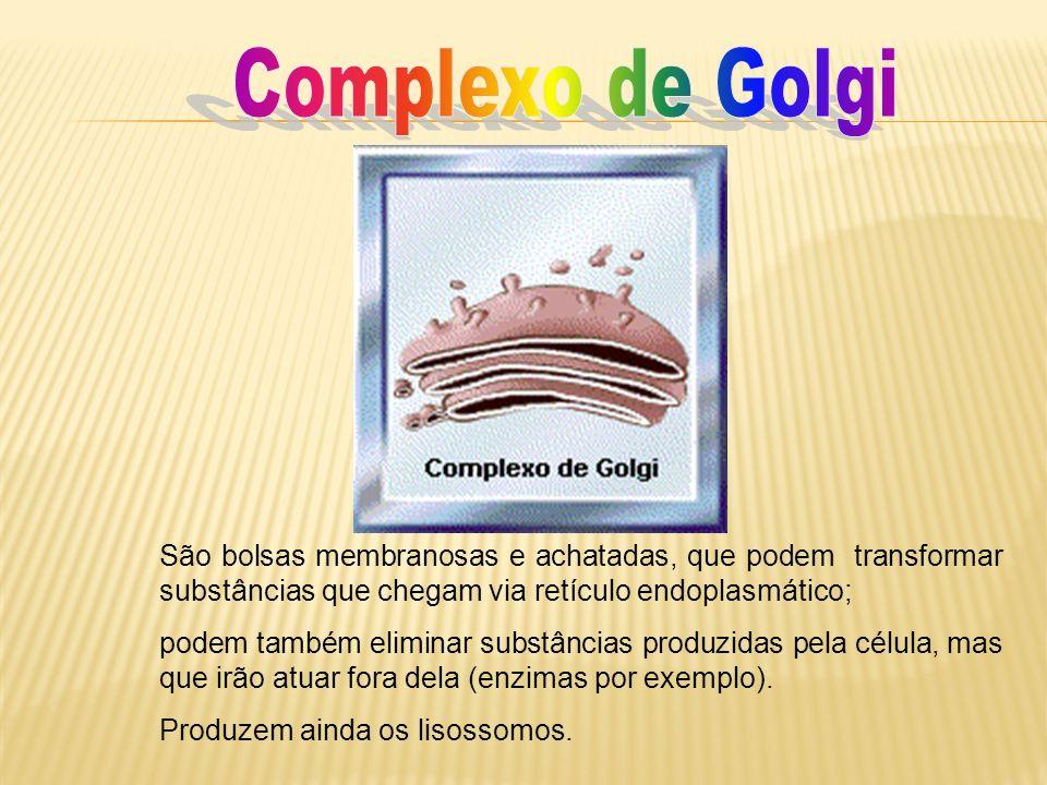 Complexo de GolgiSão bolsas membranosas e achatadas, que podem transformar substâncias que chegam via retículo endoplasmático;
