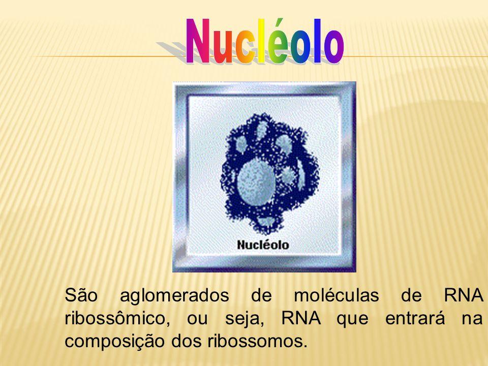 Nucléolo São aglomerados de moléculas de RNA ribossômico, ou seja, RNA que entrará na composição dos ribossomos.