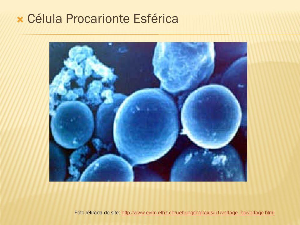 Célula Procarionte Esférica