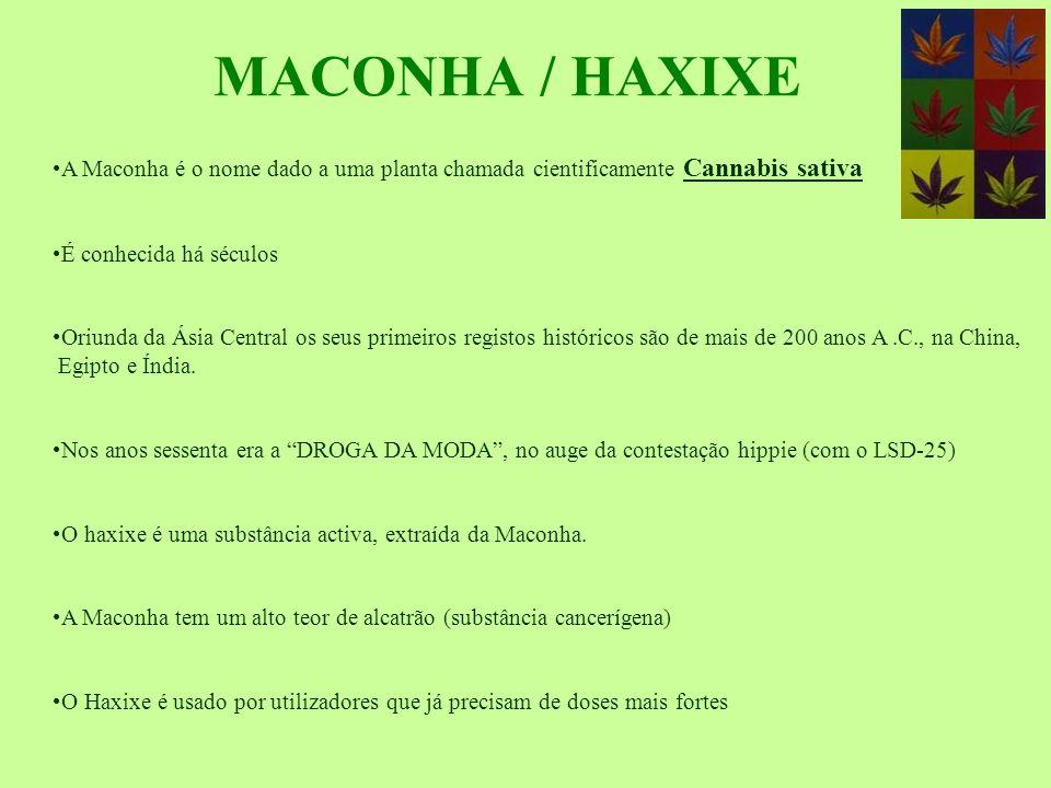 MACONHA / HAXIXE A Maconha é o nome dado a uma planta chamada cientificamente Cannabis sativa. É conhecida há séculos.