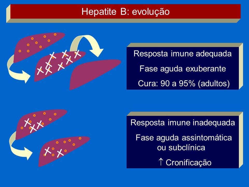 Hepatite B: evolução Resposta imune adequada Fase aguda exuberante