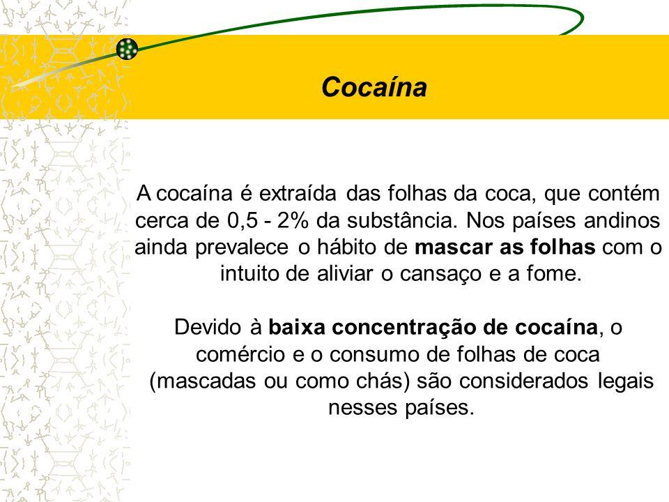 Cocaína A cocaína é extraída das folhas da coca, que contém