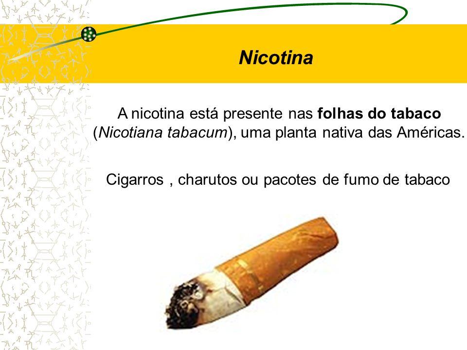 Nicotina A nicotina está presente nas folhas do tabaco