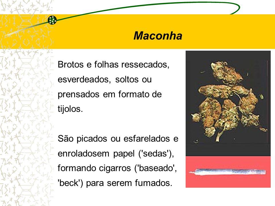 Maconha Brotos e folhas ressecados, esverdeados, soltos ou