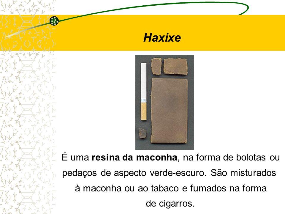 Haxixe É uma resina da maconha, na forma de bolotas ou