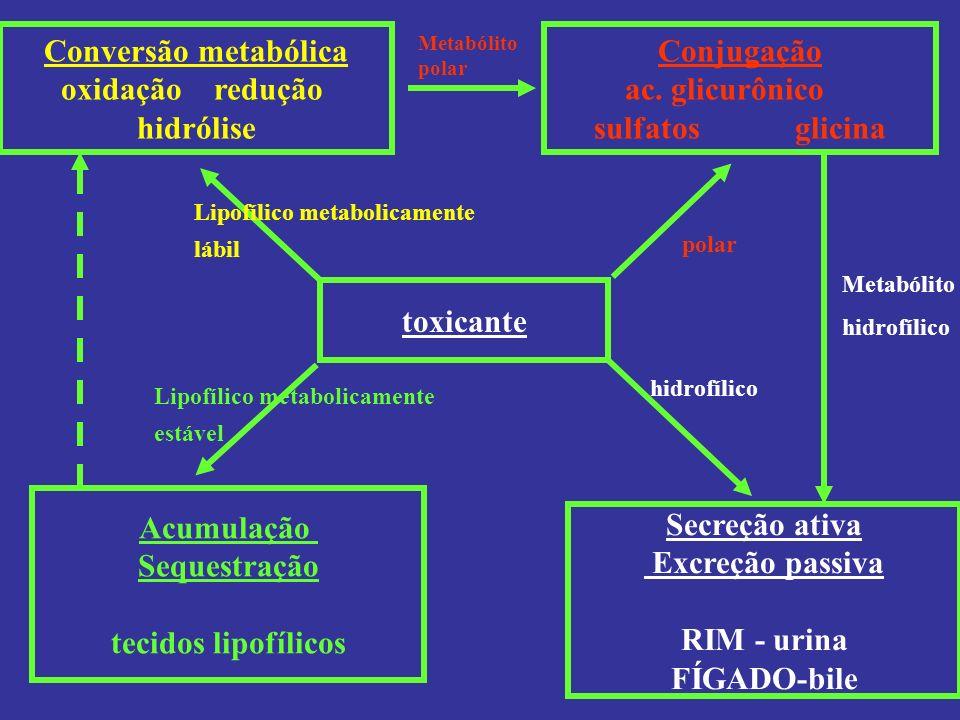 Conversão metabólica oxidação redução hidrólise Conjugação