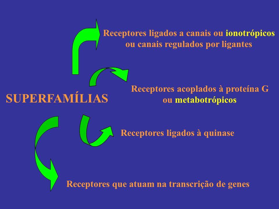 SUPERFAMÍLIAS Receptores ligados a canais ou ionotrópicos