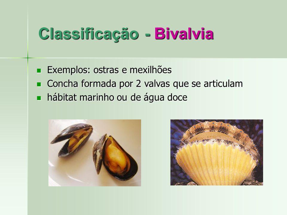 Classificação - Bivalvia