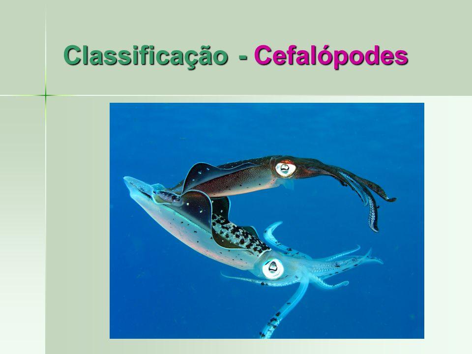 Classificação - Cefalópodes
