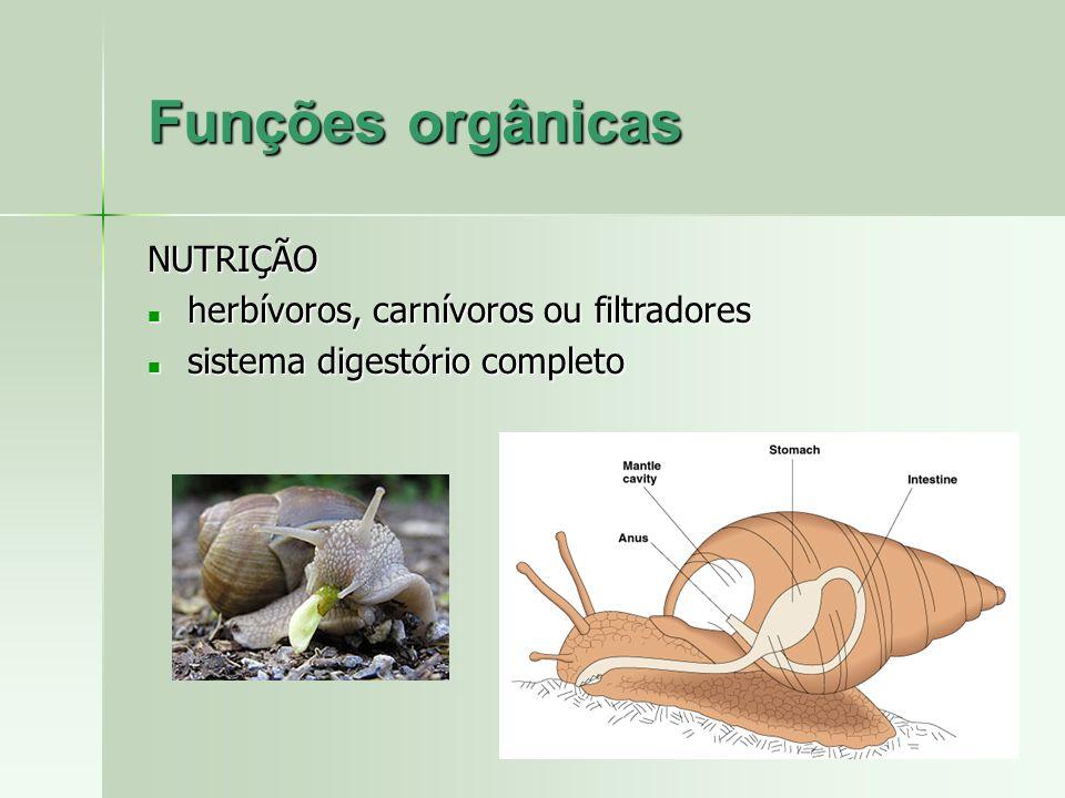 Funções orgânicas NUTRIÇÃO herbívoros, carnívoros ou filtradores