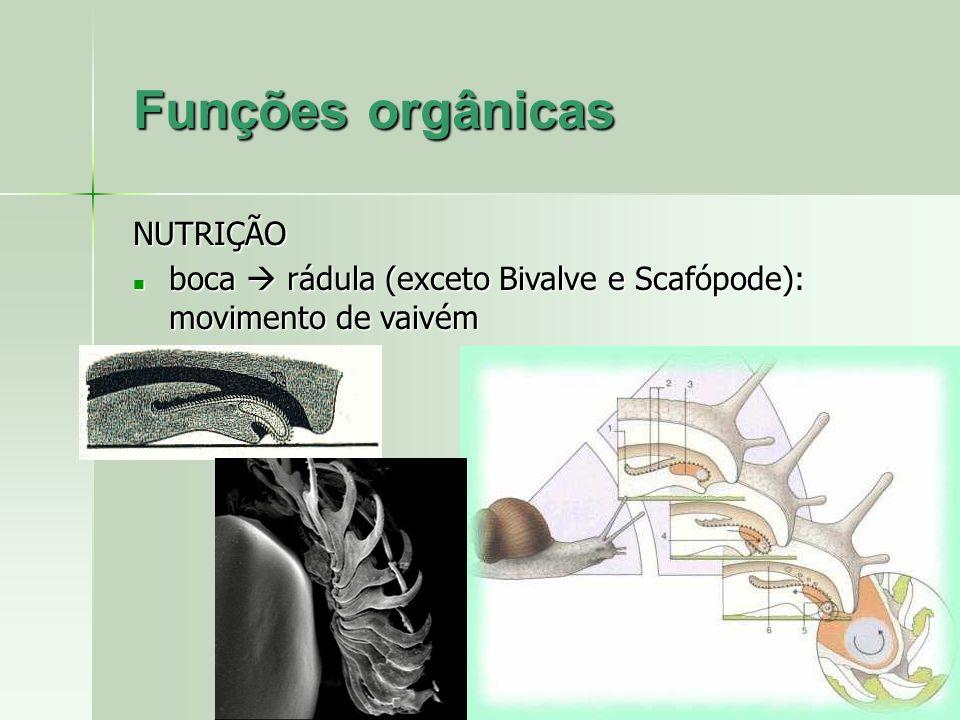Funções orgânicas NUTRIÇÃO