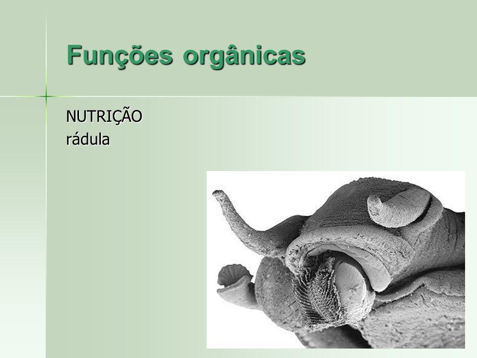 Funções orgânicas NUTRIÇÃO rádula