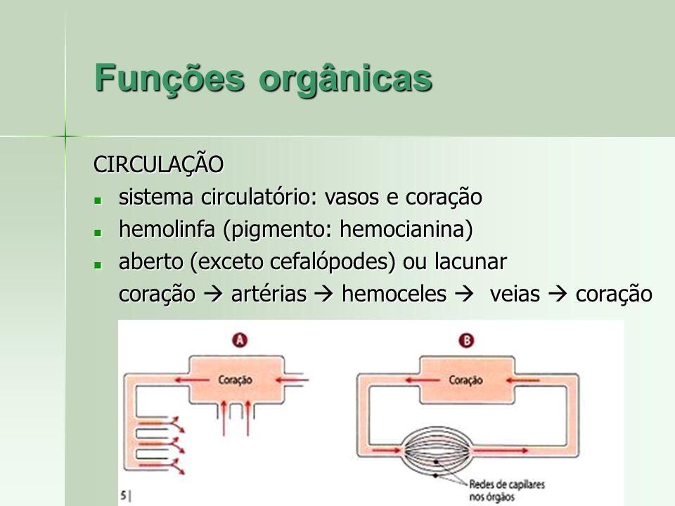 Funções orgânicas CIRCULAÇÃO sistema circulatório: vasos e coração