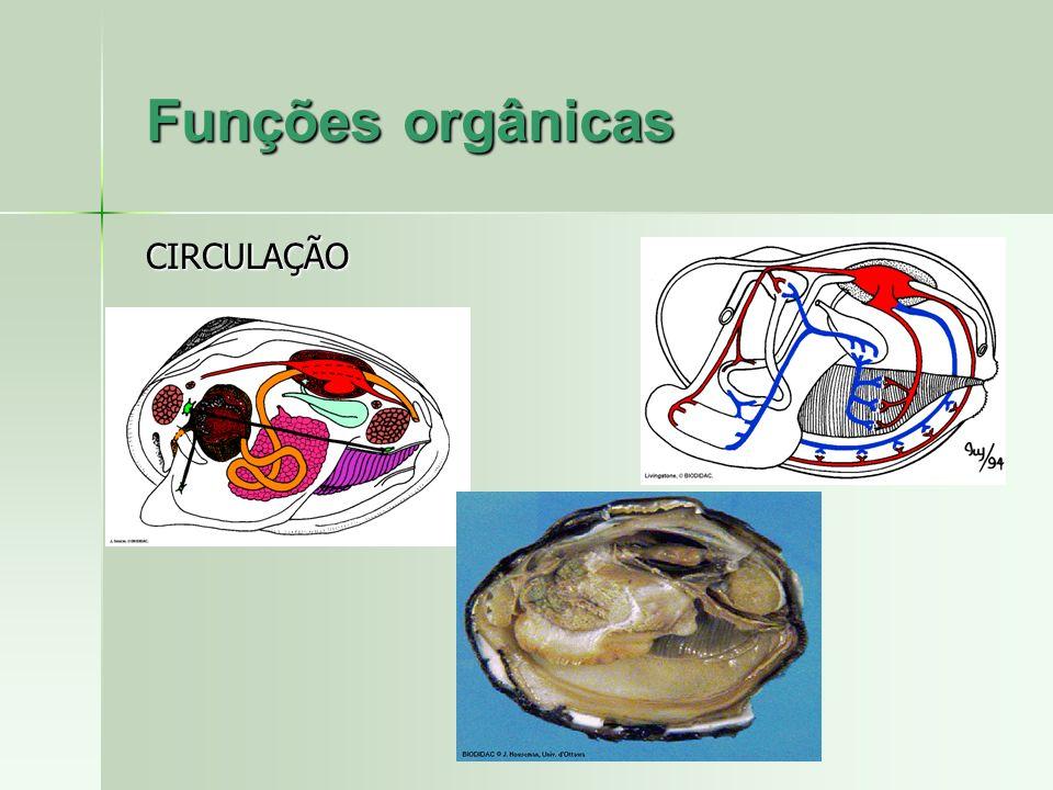 Funções orgânicas CIRCULAÇÃO